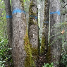 Tree marking during the CFI monitoring