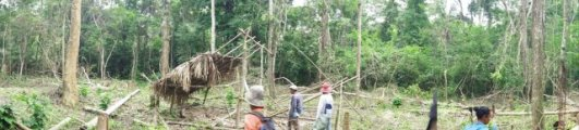 Establishment of temporary housing in a recently deforested area